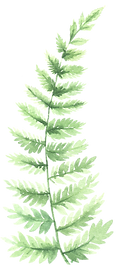 fern-element-22.png