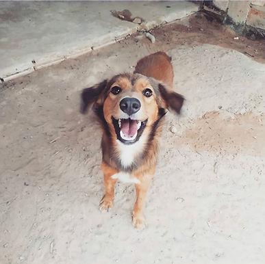 Animais em situação de abandono e maus tratos precisam de cuidados durante a pandemia