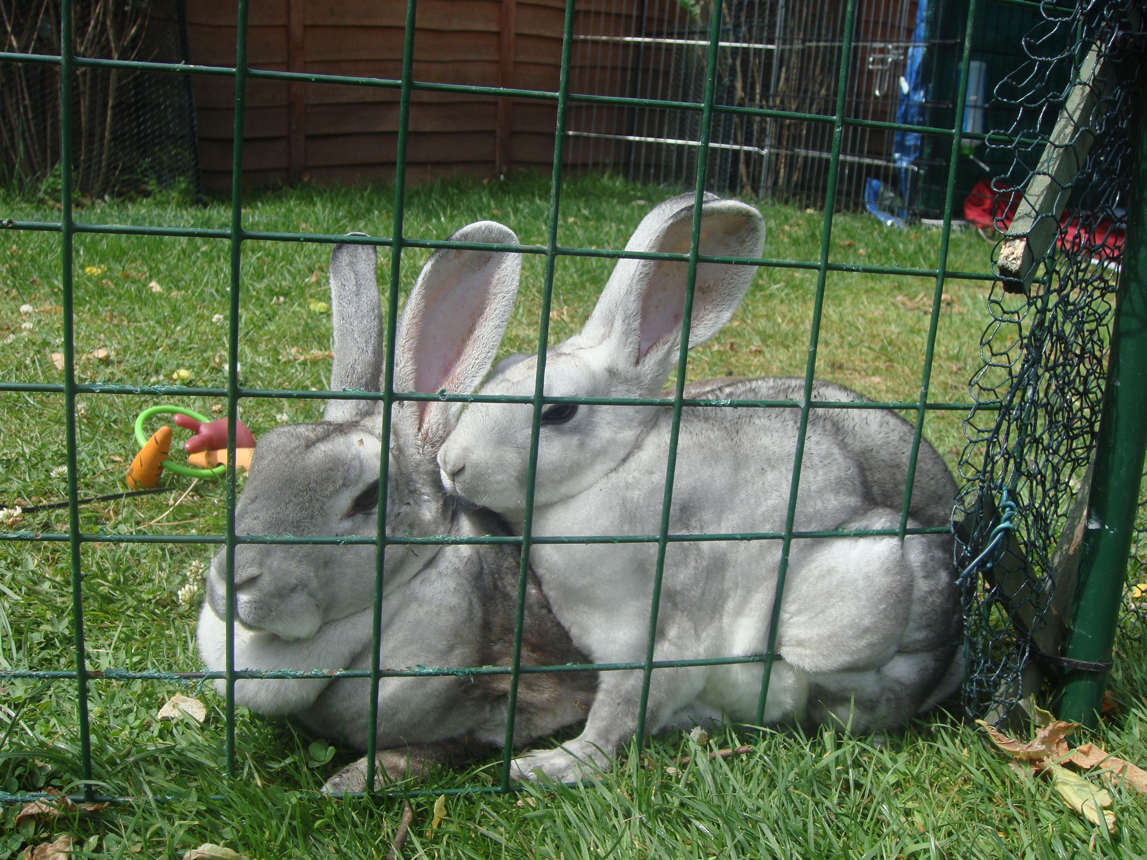 rabbit pictures 2009 050.jpg