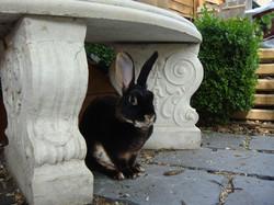 rabbit pictures 2009 021.jpg