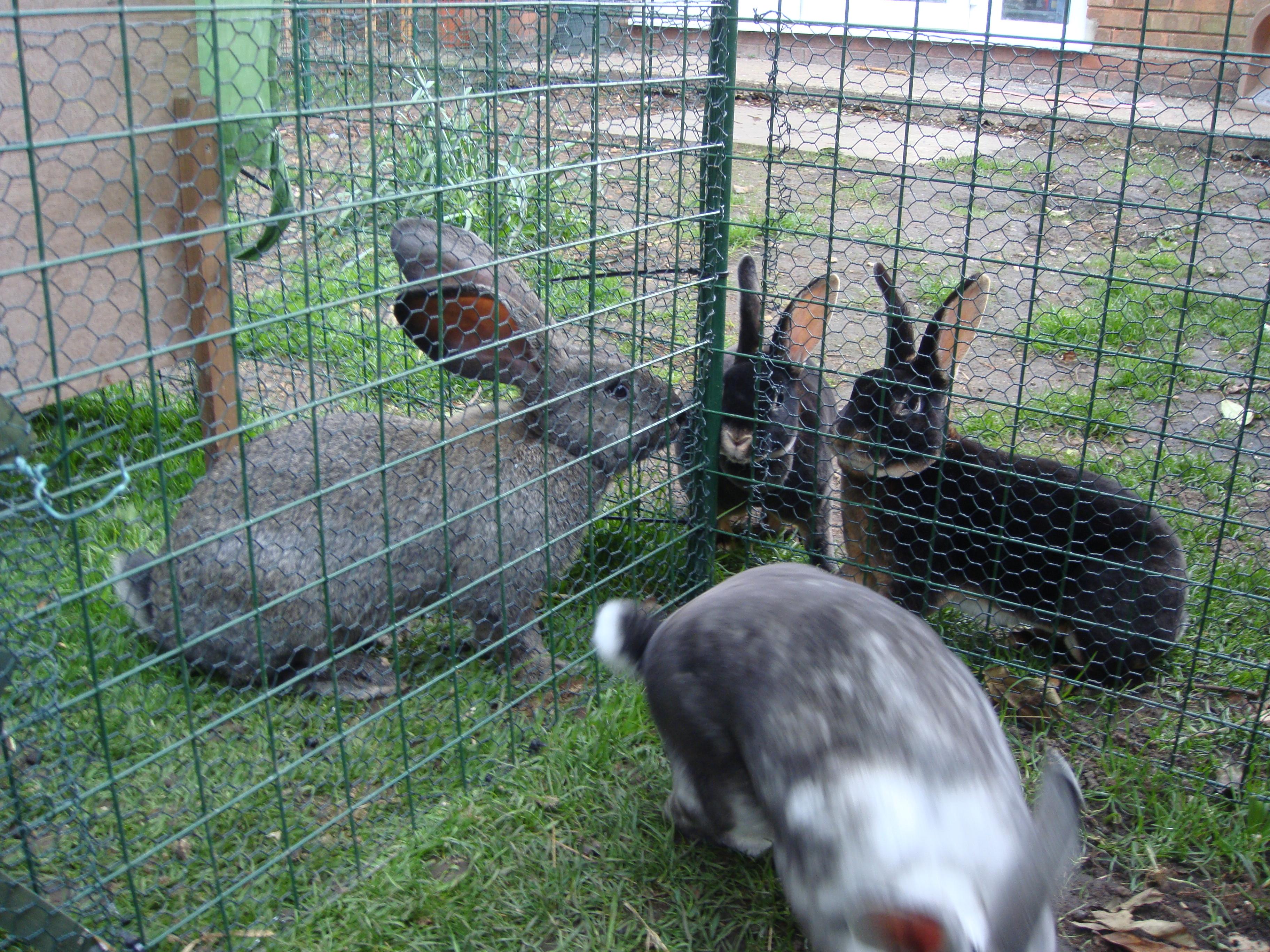 rabbit pictures 2009 006.jpg