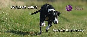 Frischer Wind - Modernes Hundetraining