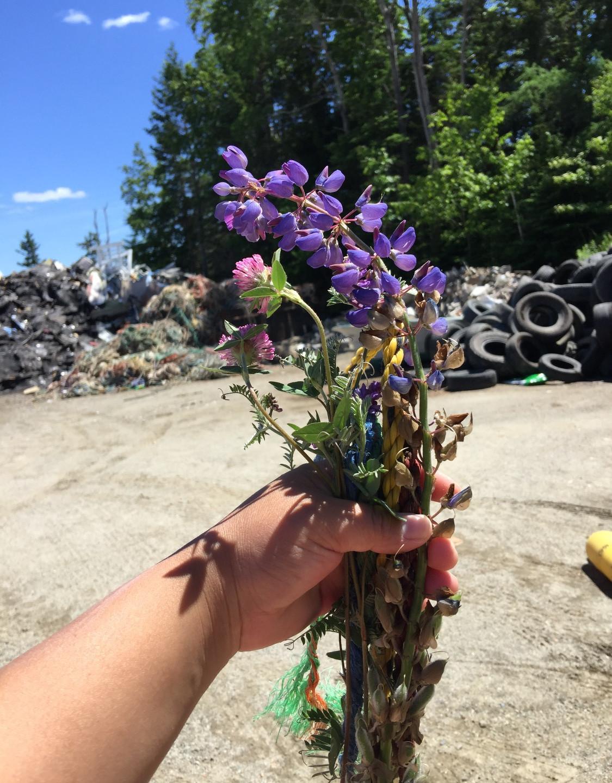 Wild flower from the dump