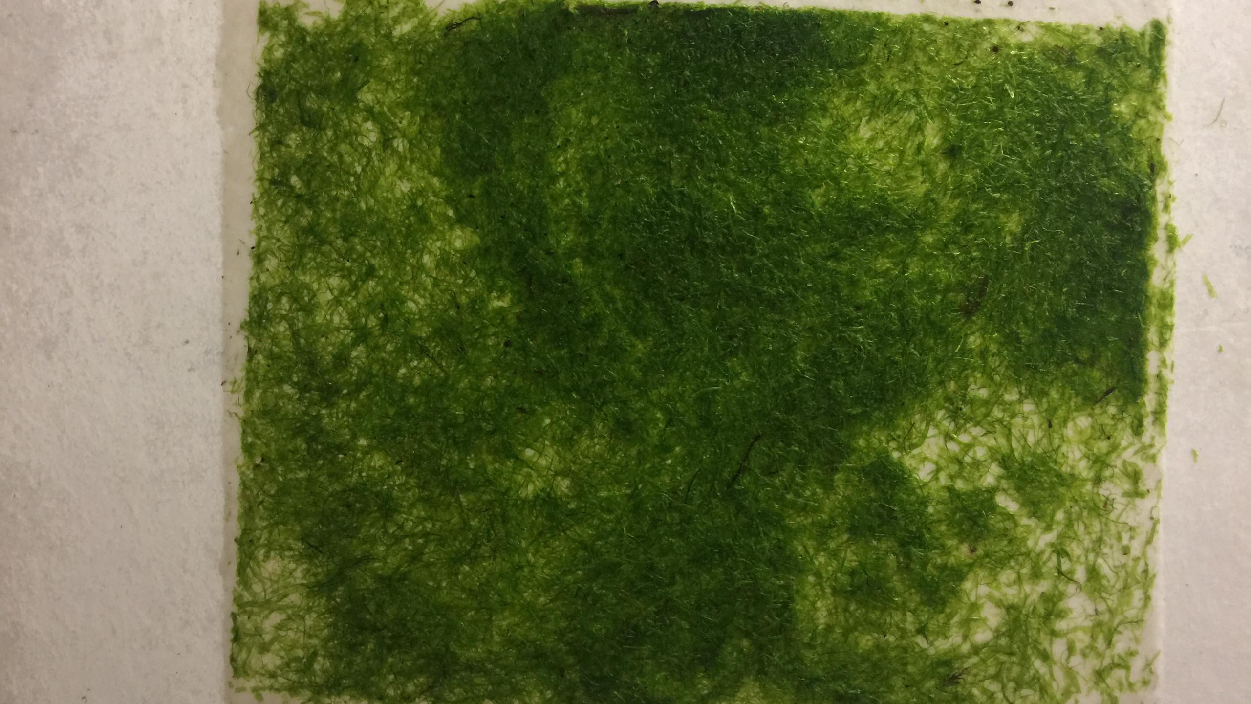 seaweed paper