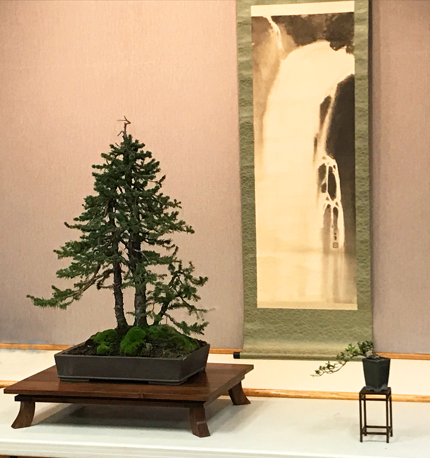 Bonsai display design Sherrod demo.