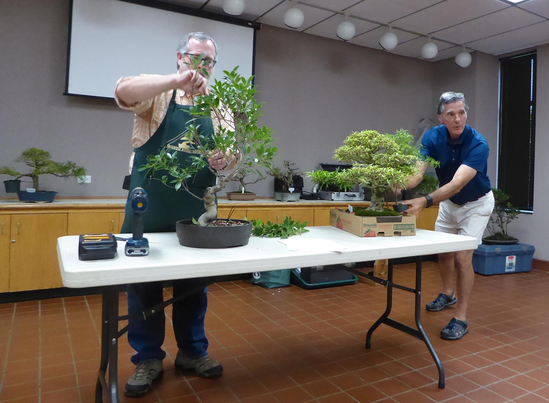 Ken and Jim - Ficus demonstrations
