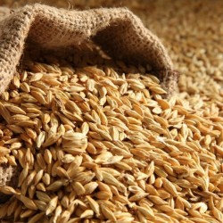 Barley (clear Bag) 20kg