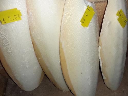 Single cuttlebone