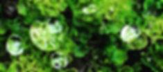 Live-Moss-Garden.jpg