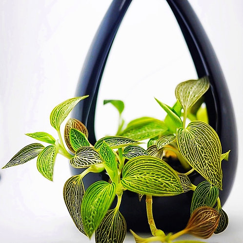 Teardrop Hanging Orchid Planter