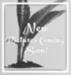 New_Picture_Coming_Soon_edited.png