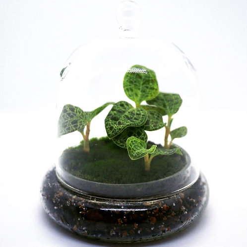Solid Glass Cloche Terrarium