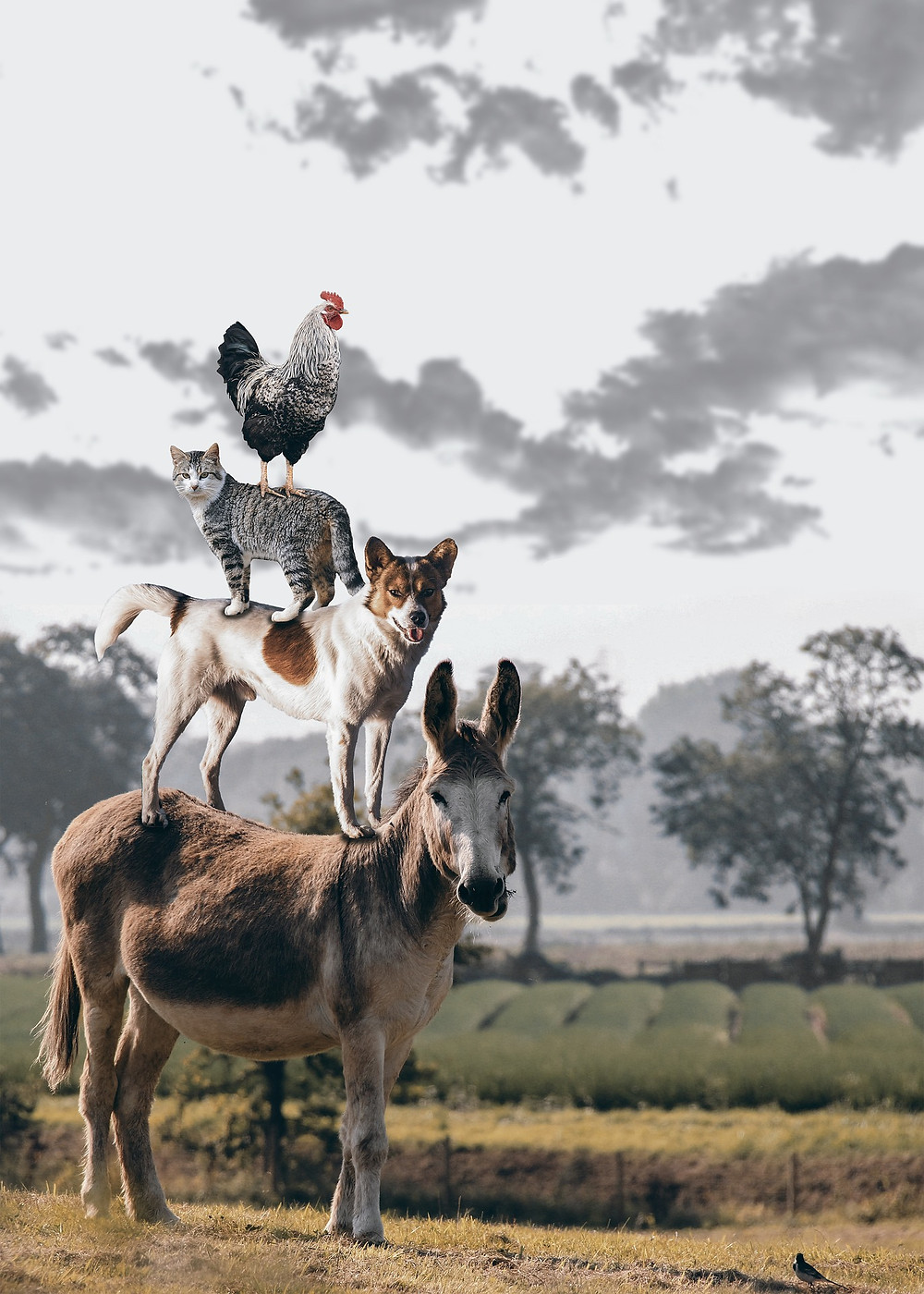 Donkey, Dog, Cat, Rooster standing on each other in a pyramid
