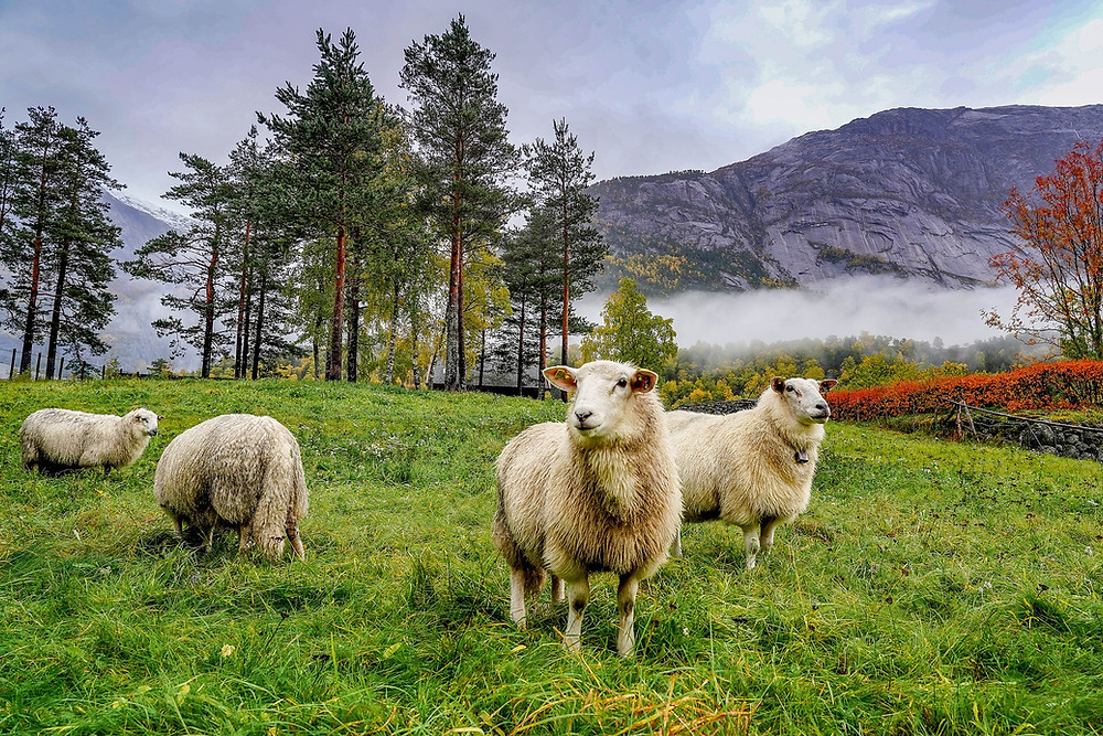 Sheep Mountains Norway from Pixabay