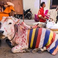 Rajasthan-6.jpg