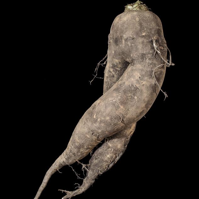 Végétaux.9