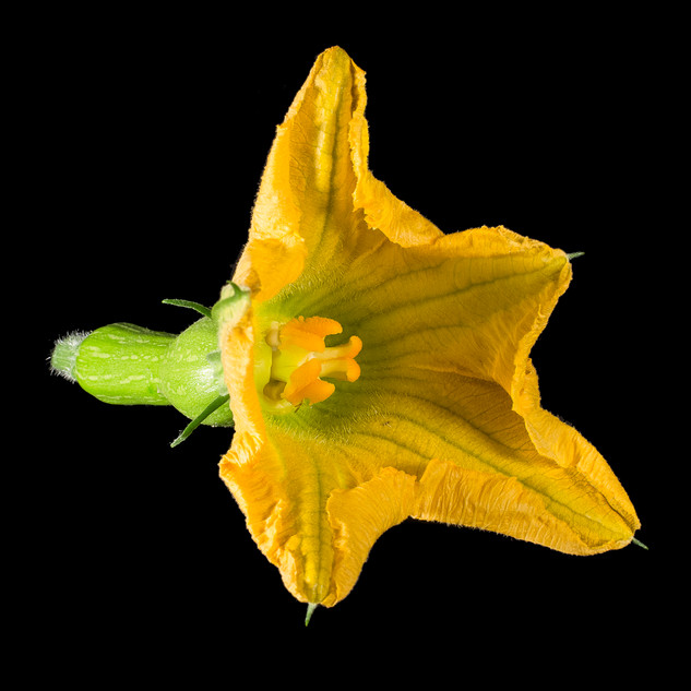 Végétaux.5