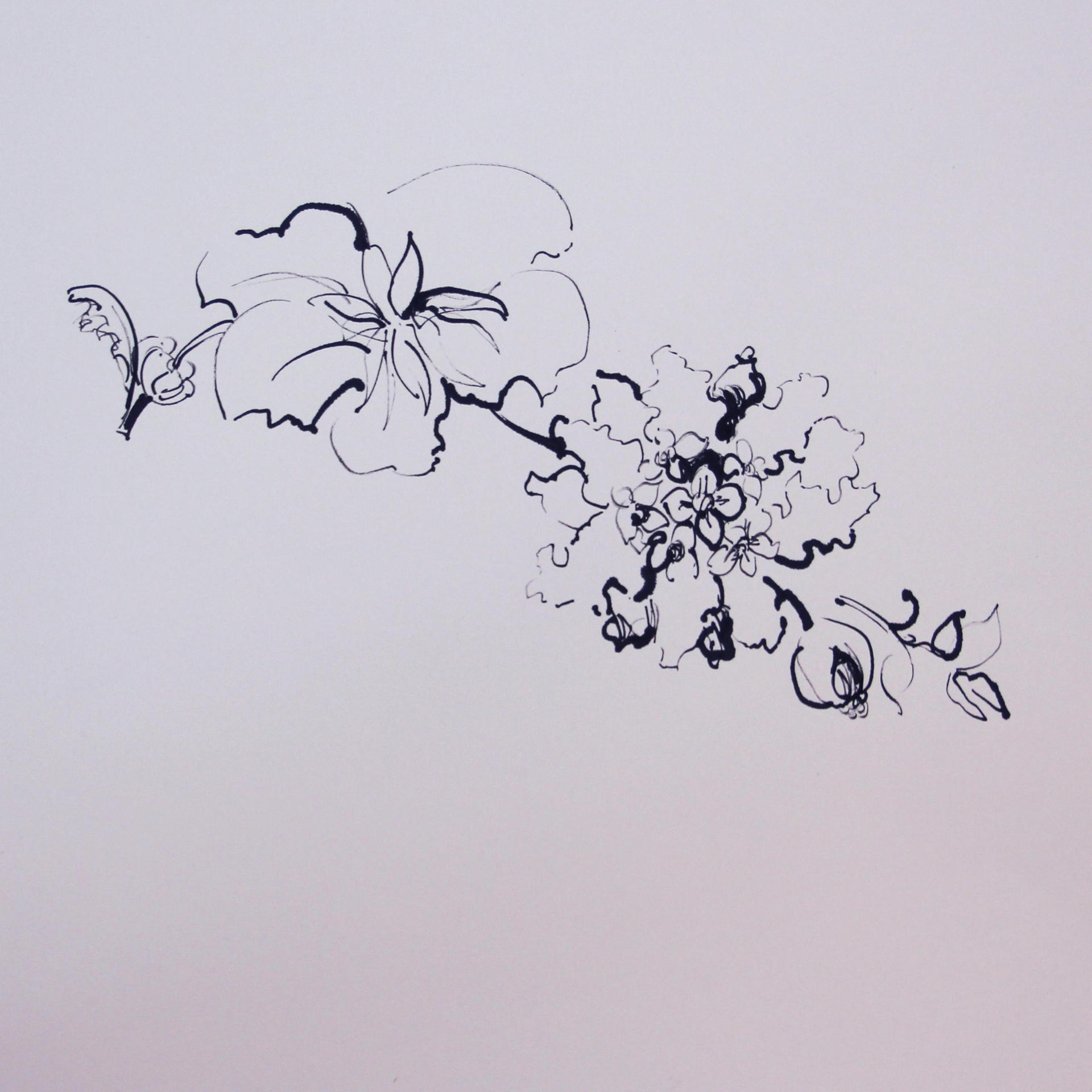 Sapir Gal ספיר גל, Flower,drawing ,Watercolor