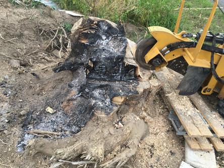 Odstranění pařezu v příkopu v Nupakách nedaleko Čestlic