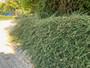 Úprava keřů a živého plotu na zahradě v Kolovratech