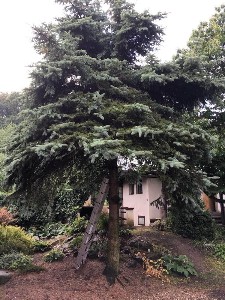 kladno rizikové kácení stromu na zahradě