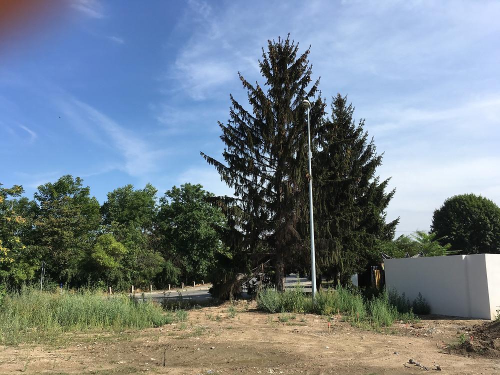 Arboristika a rizikové kácení stromů