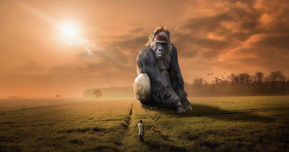 gorille_WEB.jpg