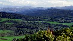český les.jpg