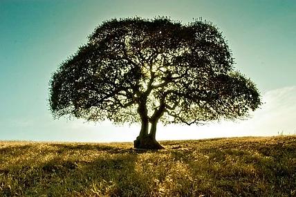 strom_v_krajině.webp