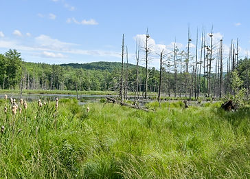 Hardy Hill rookery pond.jpg