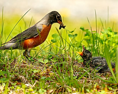 Feeding Time by Hans Schrag 2.jpg