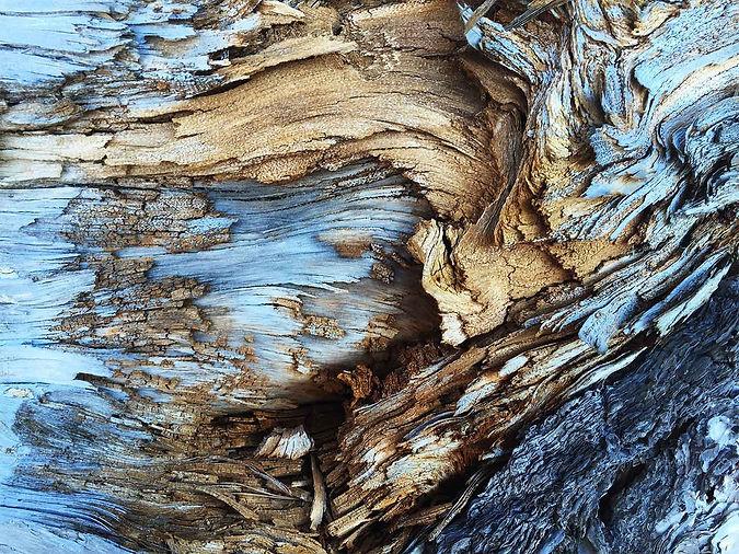 bruno-ramos-blue-nature.jpg