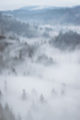 foggy-forest-mountains-inspiration.jpg
