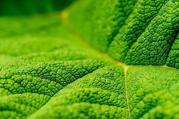 grean-leaf-inspiration.jpg
