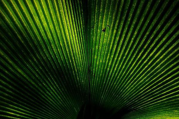green-plant-inspiration.jpg