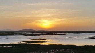 Atardecer, Laguna Palo Verde. Febrero 2016