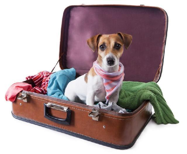 Como escolher um hotel, pet sitter ou viajar com seu bicho de estimação