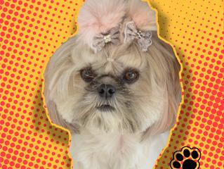 Você conhece a primeira Youtuber canina no mundo?