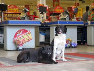 Cães refazem passos de dono morto há dois anos e geram comoção em SP