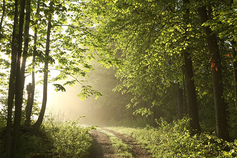 Forest path on a sunny May morning..jpg