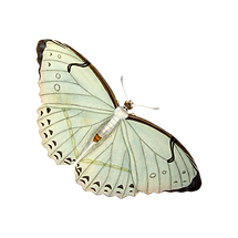 butterfly-4653725.png