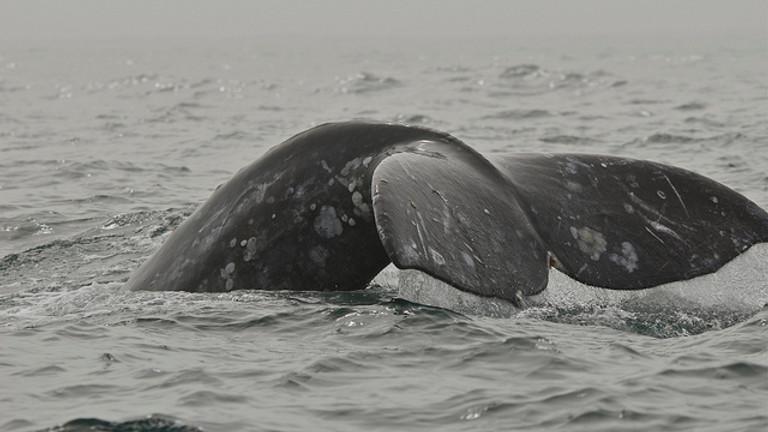 American Cetacean Society Monthly Speaker Series