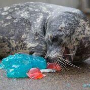 Oregon Coast Aquarium To Re-Open