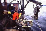 Commercial Crab Fishery Opens December 16th