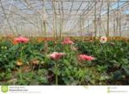 dalat greenhouse 1
