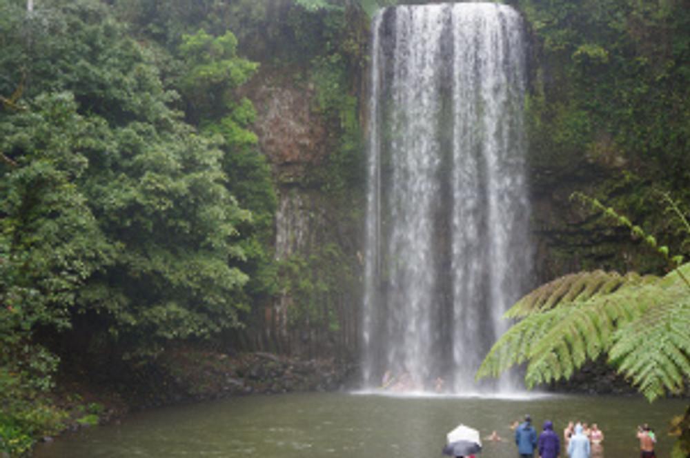 Tourists watching teenagers swimming under Millaa Millaa Falls