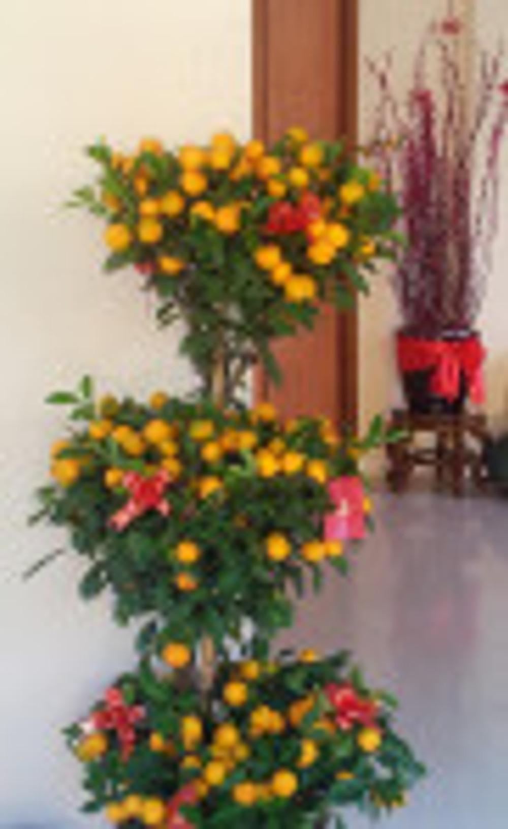 Bountiful kumquats, rooted willows