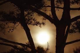Awaiting Mid-Autumn: Sun and Moon