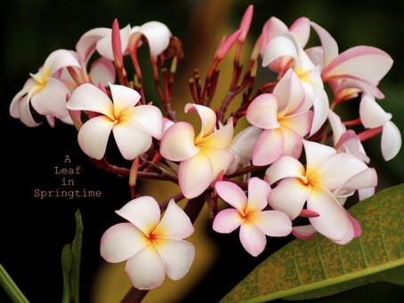 Memoirs of a kampung girl – a follow up