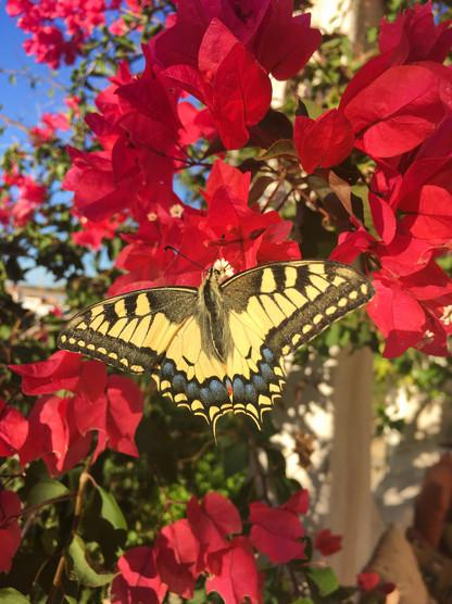 Butterfly at Casa Isadora